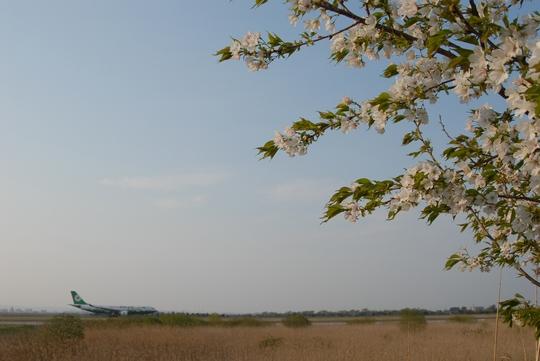 080424_桜.jpg