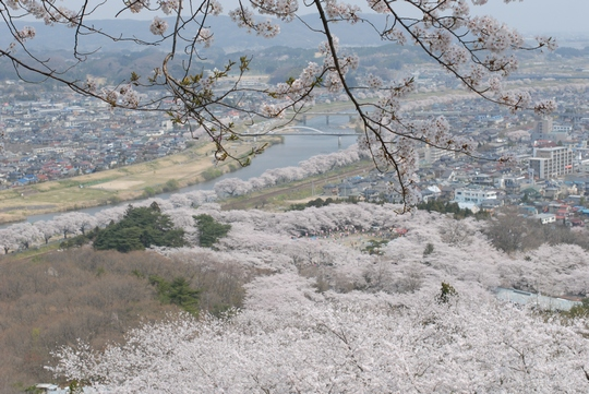 090411_お花見2.jpg