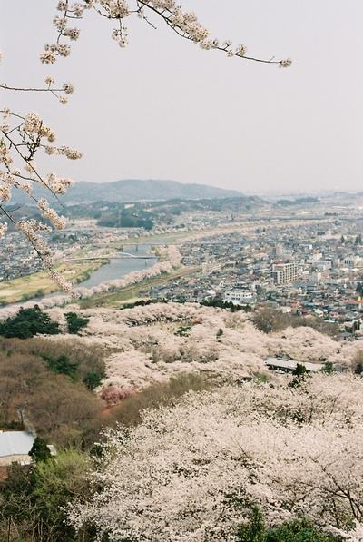 090516_さくら2.jpg