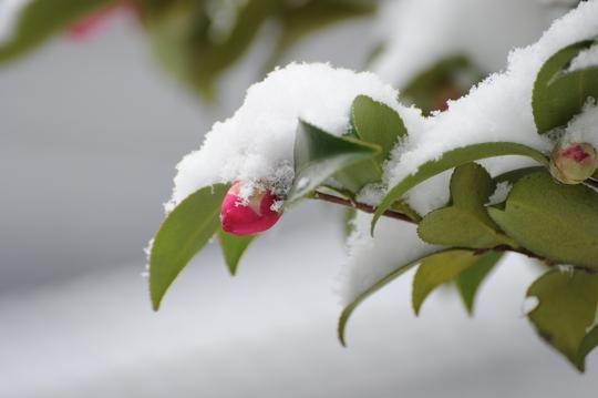 101225_雪1.jpg