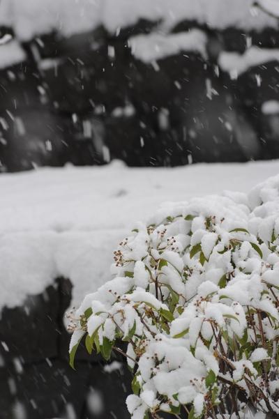 101225_雪2.jpg