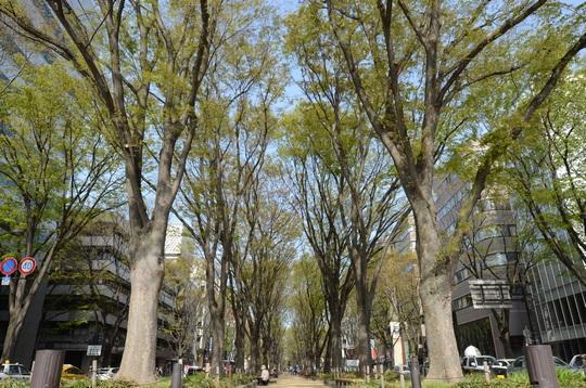 120501_定禅寺通り2.jpg