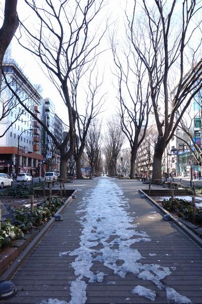 130203_定禅寺通り1.jpg