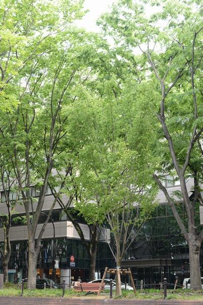 130526_定禅寺通り3.jpg