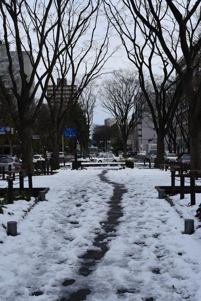 160123_定禅寺通り02_D72_1207.jpg
