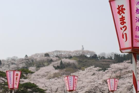 090415_お花見01.jpg