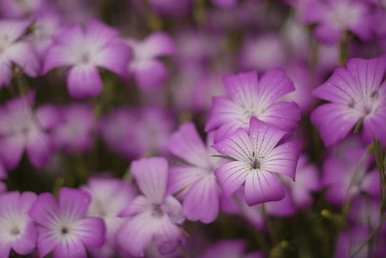 090524_お花3.jpg