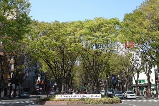 130429_定禅寺通り1.jpg